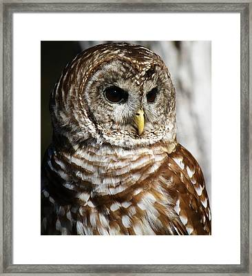Barred Owl Framed Print by Paulette Thomas