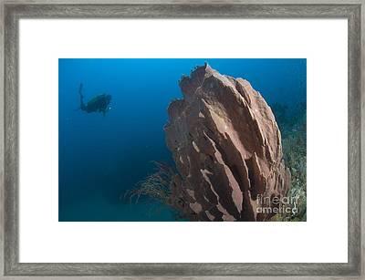 Barrel Sponge And Diver, Papua New Framed Print by Steve Jones