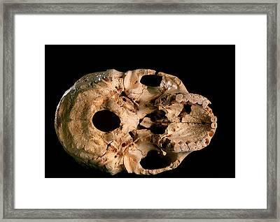 Base Of Skull 5, Sima De Los Huesos Framed Print by Javier Truebamsf