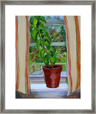 Basil In My Window Framed Print by Phebe Smith