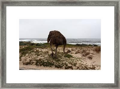 Beach Bird Framed Print by Aidan Moran