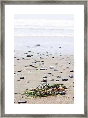 Beach Detail On Pacific Ocean Coast Of Canada Framed Print by Elena Elisseeva