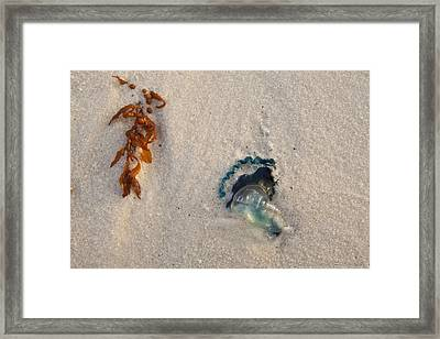 Beached Framed Print by Charles Warren