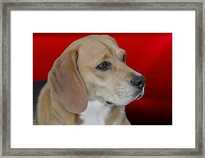Beagle - A Hound's Hound Framed Print by Christine Till