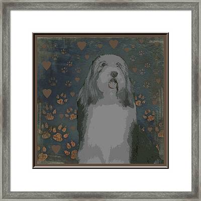 Bearded Collie Framed Print by One Rude Dawg Orcutt