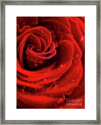 Beautiful Abstract Red Rose Framed Print by Oleksiy Maksymenko