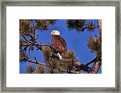 Beautiful Baldy Framed Print by Don Mann