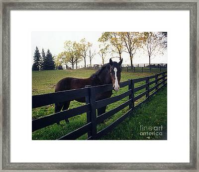 Beautiful Horse In Pasture Nature Landscape Framed Print by Kathy Fornal