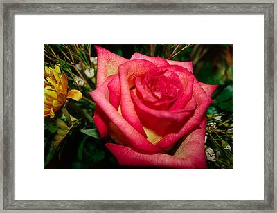 Beautiful Rose Framed Print by David Alexander