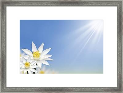 Beautiful White Lotus Flower  Framed Print by Natthawut Punyosaeng