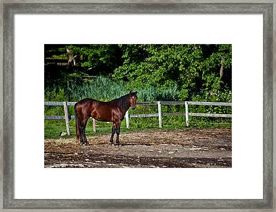 Beauty Of A Horse Framed Print by Karol Livote