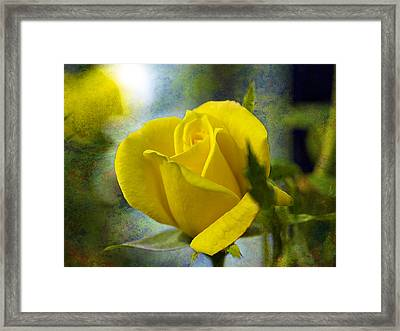 Beauty Of A Yellow Rose Framed Print by J Larry Walker