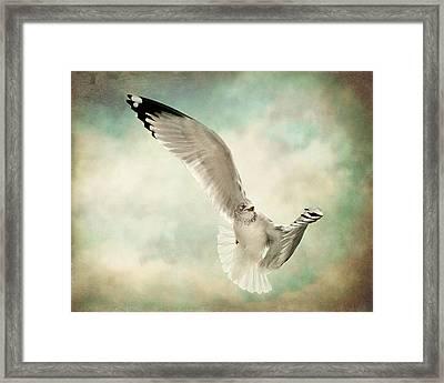 Beauty Of Flight Framed Print by Jody Trappe Photography