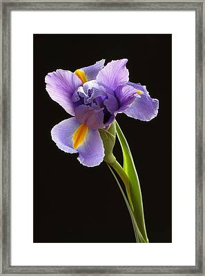 Beauty To Unfold Framed Print by Juergen Roth