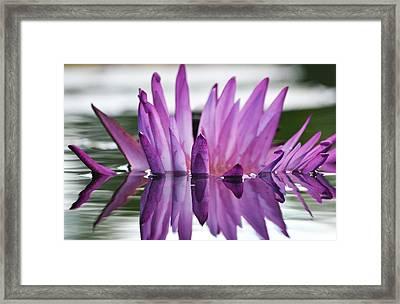 Beauty Within Framed Print by Melanie Moraga