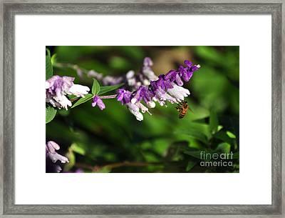 Bee On Flower Framed Print by Kaye Menner