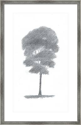 Beech Tree Drawing Number One Framed Print by Alan Daysh