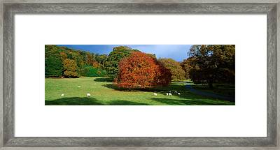 Beech Tree, Glendalough, Co Wicklow Framed Print by The Irish Image Collection