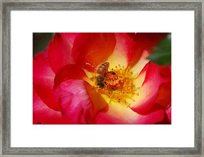Beetobee Framed Print by Don Wright