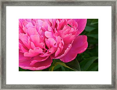 Behold The Beauty Framed Print by Frozen in Time Fine Art Photography