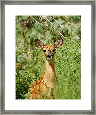 Being Watched Framed Print by Ernie Echols