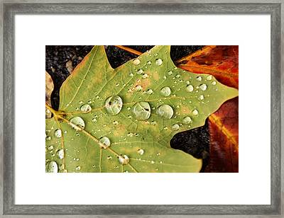 Bejeweled Leaves Framed Print by Matthew Green
