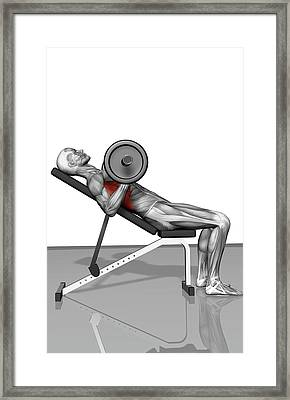 Bench Press Incline (part 2 Of 2) Framed Print by MedicalRF.com