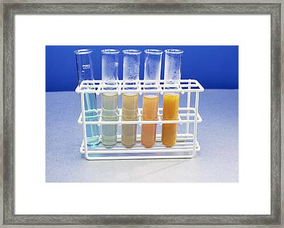 Benedict's Test For Sugars Framed Print by Andrew Lambert Photography