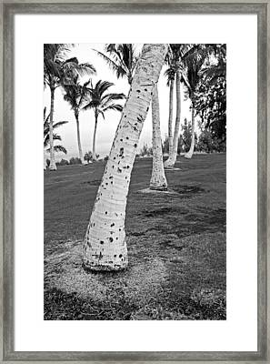 Bent Palm Framed Print by James Steele