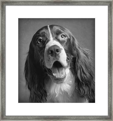 Bernie Framed Print by Ron Schwager