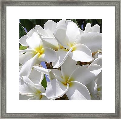 Best Plumeria Framed Print by Karen Nicholson