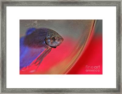Beta Framed Print by Joann Vitali