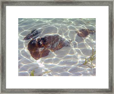 Betty Davis Eyes- Southern Stingray Framed Print by Li Newton