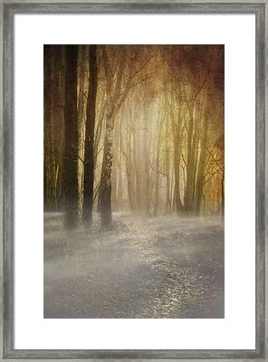 Beware Misty Woodland Path Framed Print by Meirion Matthias