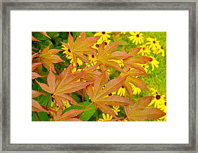 Beyond The Leaves Framed Print by Randy Rosenberger