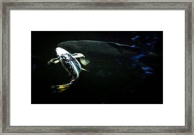 Big And Little Framed Print by Don Mann