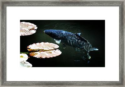 Big Blue Framed Print by Don Mann