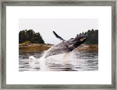 Big Breach Framed Print by Darcy Michaelchuk