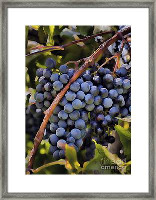 Big Bunch Of Grapes Framed Print by Michael Flood