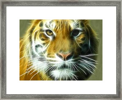 Big Cat Big Stripes Framed Print by Tilly Williams