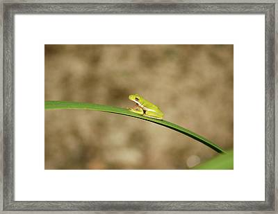 Big Mouth Framed Print by Kathy Gibbons