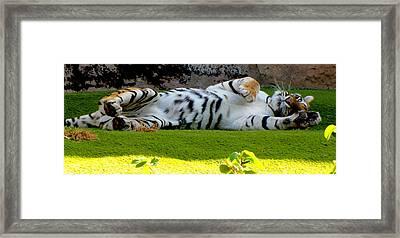 Big Pussycat Framed Print by Barbara Walsh