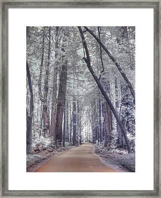 Big Sur State Park Framed Print by Jane Linders