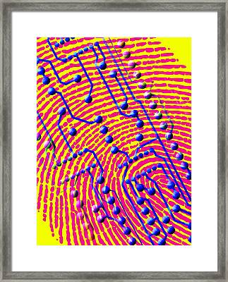 Biometric Fingerprint Scan Framed Print by Pasieka