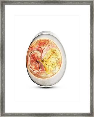 Bird Egg, Artwork Framed Print by Claus Lunau