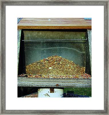 Bird Feeder Framed Print by Todd Sherlock