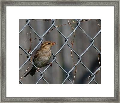 Bird In A Wire Framed Print by Joe Wicks