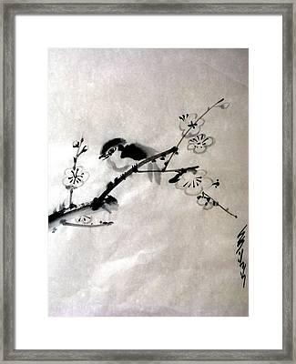 Bird In Plumtree Framed Print by Sid Solomon