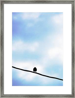 Bird  On A Wire Framed Print by Ed Bricker