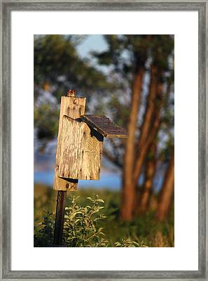 Birdhouse 23 Framed Print by Andrew Pacheco
